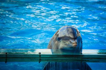 Dolphin in Lisbon Zoo