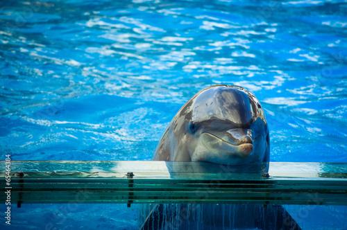 Deurstickers Dolfijn Dolphin in Lisbon Zoo