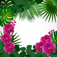 Floral design background. Orchid flowers.