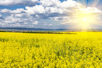 Rapeseed field and sun