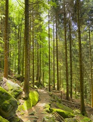 Black Forest Hiking Trail 01