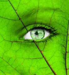 Ecology conceptual image with green human eye