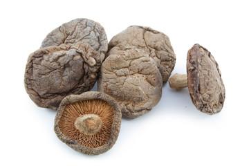 Shitake mushroom