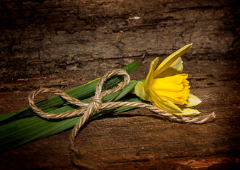 Нарцисс на старом дощатом фоне