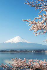 Fuji mountain and Sakura view