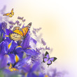 Blue irises with yellow daisies, floral background.