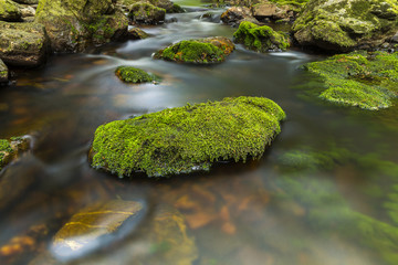 Lost stone with moss in a wild river