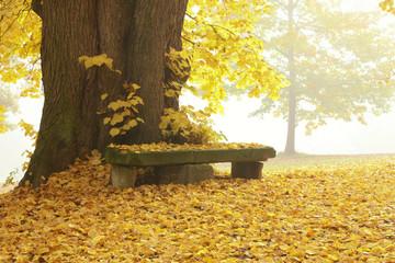 Parkbank unter Lindenbaum an einem nebligen Herbsttag