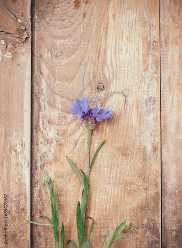 canvas print picture cornflower