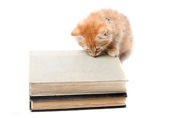 Studious orange kitten