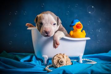питбуль в ванне