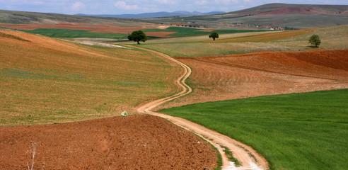 Champs et chemin de terre