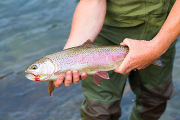 Catch and Release Native Rainbow Redside Trout
