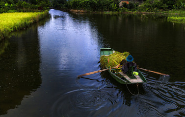Rice boat on rive