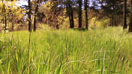 Bright green grass. Animal view.  Steadicam  smooth  shot