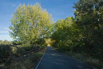 Black poplar road