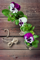 Pansy flowers in small pots with string bow, on wooden backgroun