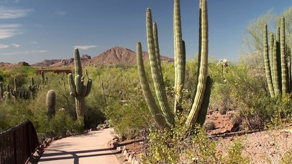 Hiking Guy at the Desert Botanical Garden. Phoenix, Arizona