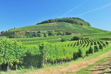 Weinanbaugebiet am Kaiserstuhl im Schwarzwald