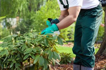 Gardener spraying a plant