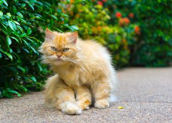 Red sitting cat