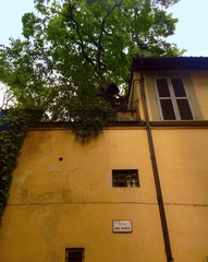 picturesque old house with roof garden  in Florence