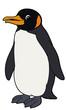 Cartoon animal - penguin - flat coloring style
