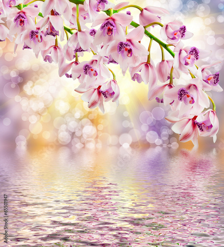 Poster Orchidee orchid flower