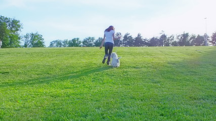 West Highland White Terrier walking