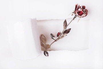 Artificial rose and torn paper