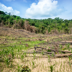 Deforestation in El Nido, Palawan - Philippines