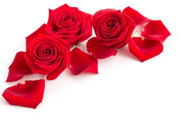 Rosenblüten und Rosenblütenblätter