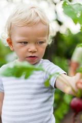 Junge erntet im Garten