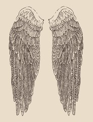 angel wings illustration, engraved style