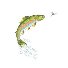 American trout jumps vector ilustracion