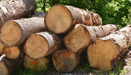 industrie du bois...coupe