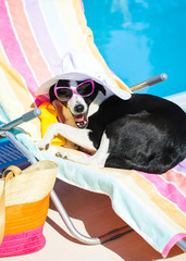 Funny dog resting on summer vacation at swimming pool
