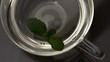 Mint leaf falling into glass cup of water