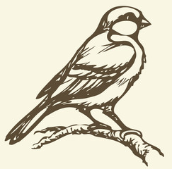 Vector drawing. Small titmouse on a branch