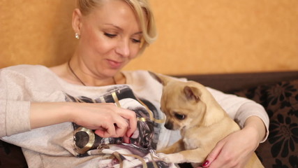 Chihuahua forepaws relies on pregnant woman's belly