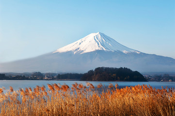 Fuji Mountain and golden grass