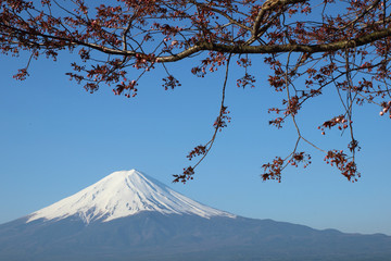 Mt.Fuji with Sakura at Lake Kawaguch