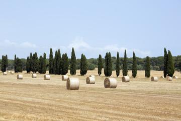 Campo d'estate dopo il raccolto