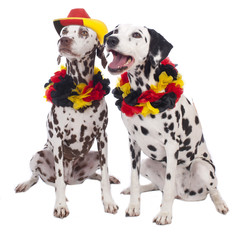 Dalmatiner Hunde im Fußballfieber