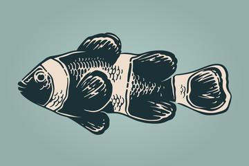 Vector vintage illustration of clownfish