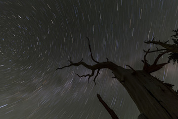 Wicked Tree Star Trails
