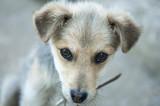 Sad dog looking helpless poster