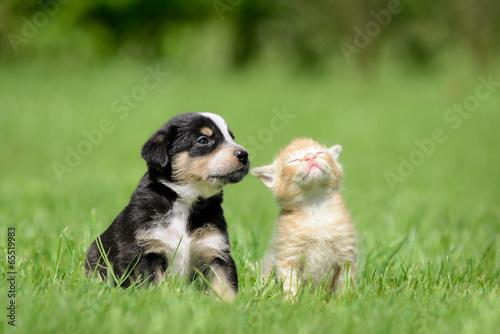 Foto op Canvas Hond Hund Katze Freunde
