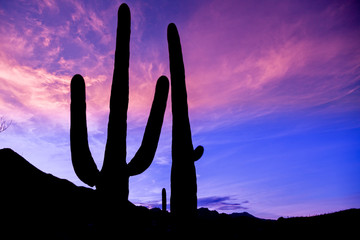 Arizona Desert Saguaro Sunset