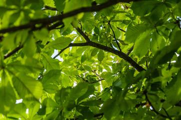 Tunnel di foglie
